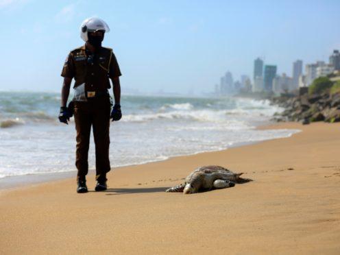 A Sri Lankan policeman looks at a dead turtle that washed ashore in Colombo, Sri Lanka (Krishan Kariyawasam/AP)