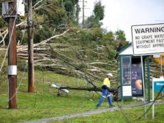 Downed power lines and fallen trees in Melbourne, Australia (James Ross/AAP Image via AP)