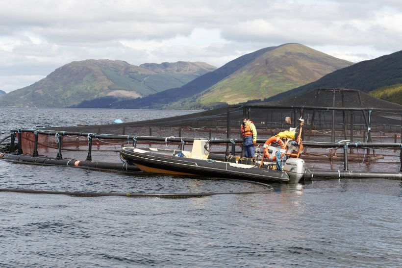 Crown Estate Scotland manages the leases for around 750 fish farm sites