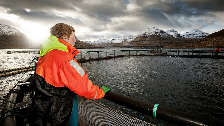 Faroese salmon farmer Bakkafrost forecasts volume growth of 40 per cent