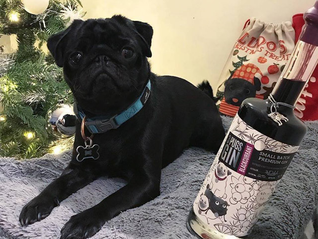 Featured Image for 3 Pugs Gin is the perfect gift for dog lovers everywhere