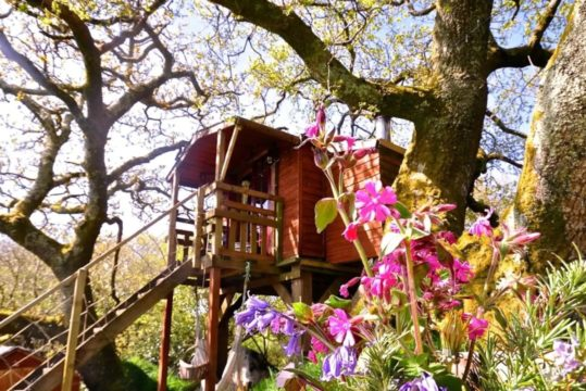 Featured Image for This Gin Making Experience Allows You to Stay In a Treehouse Gin Distillery