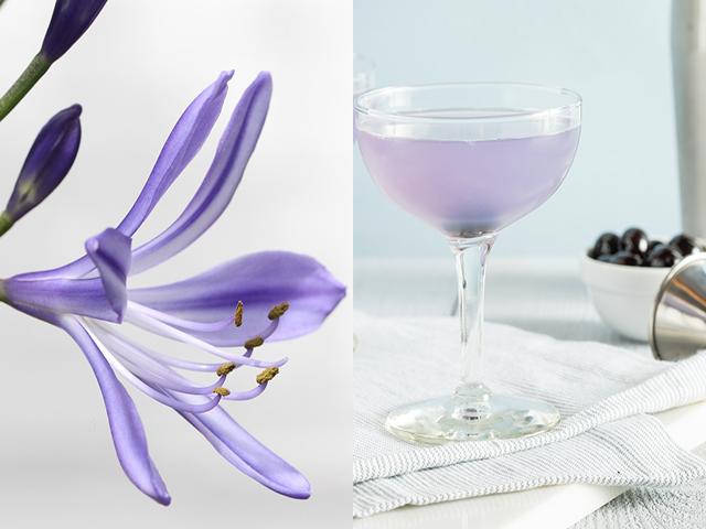Featured Image for Make your own Creme de Violette liqueur
