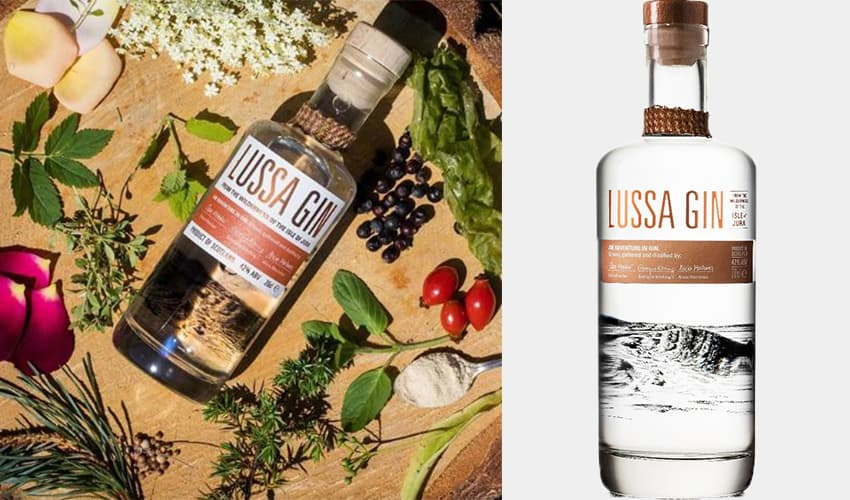 things to know about gin