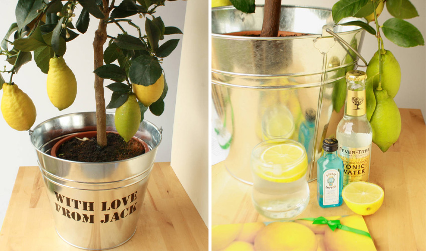 grow your own gin and tonic