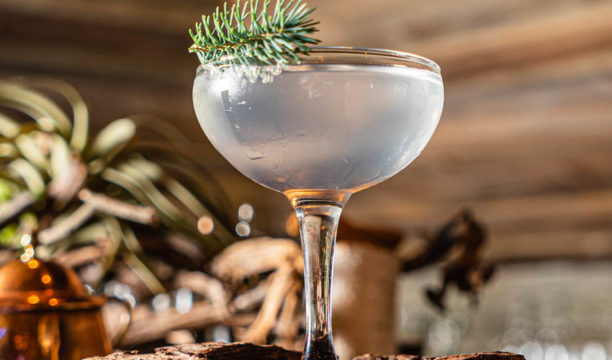 Featured Image for Here's How Make Your Own Winter Gin From 'Christmas Trees'!