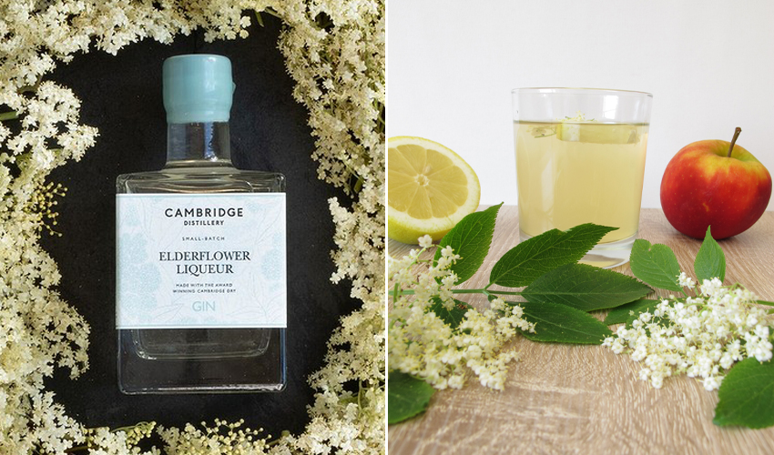 Cambrdge distillery elderflower liqueur