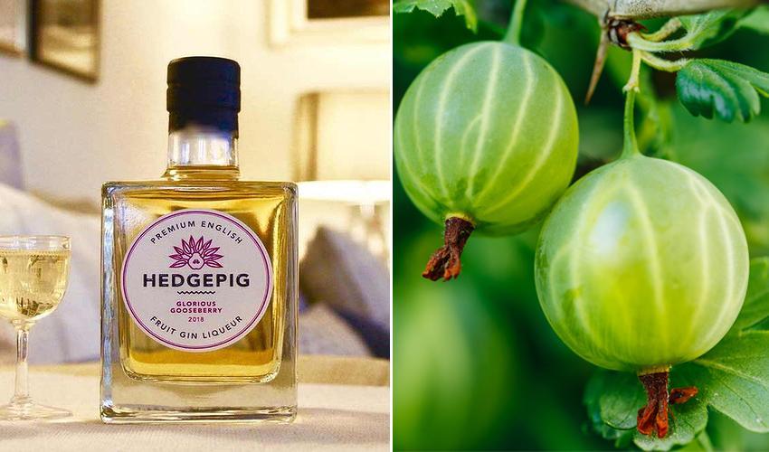 Hedgepig gooseberry gin liqueur