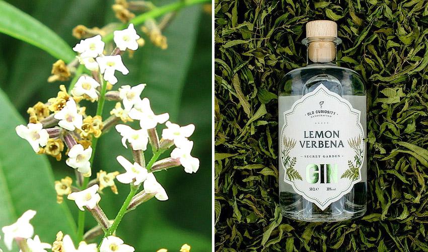 lemon verbena gin