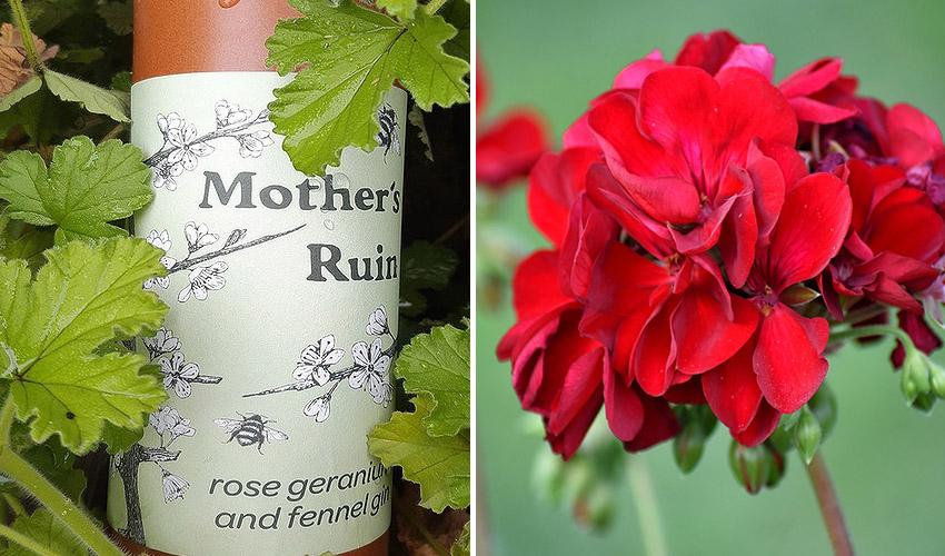 Rose Geranium & Fennel Gin