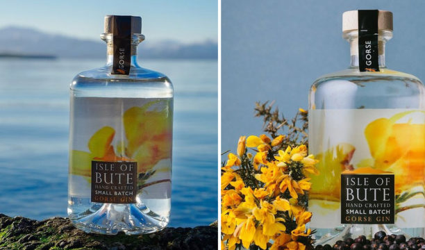 isle of bute gorse gin review