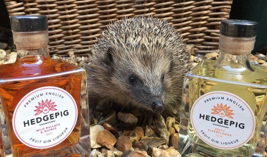 fruity hedgepig gin tasting