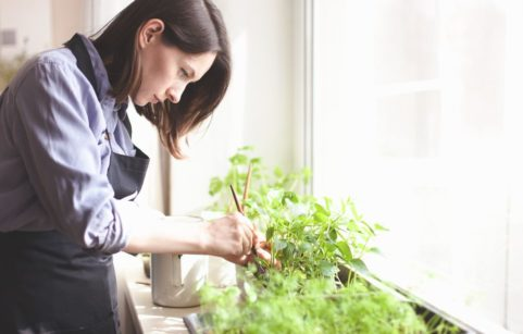 woman growing vegetables on windowsill