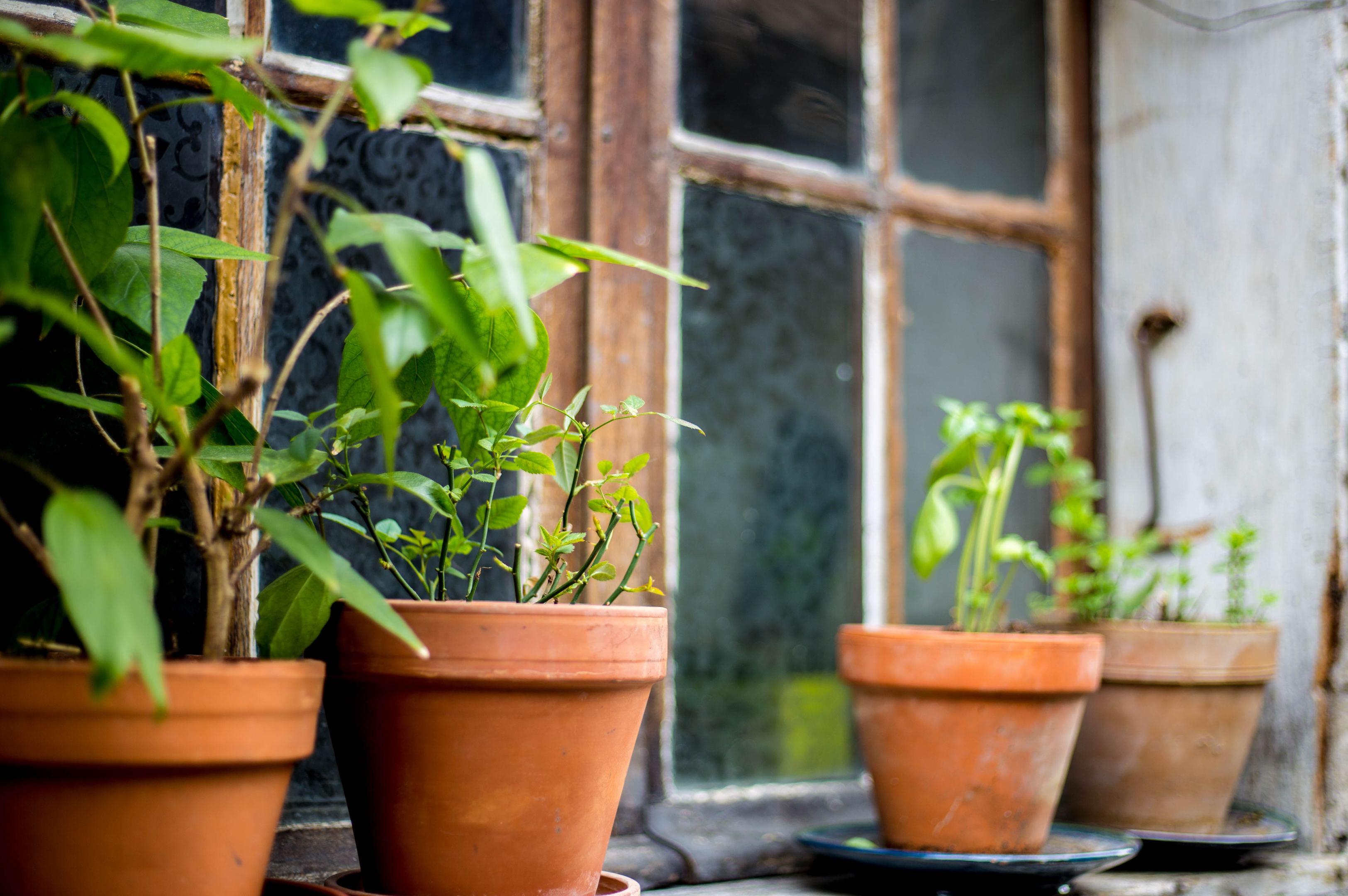 easy tips to grow fruit and veg