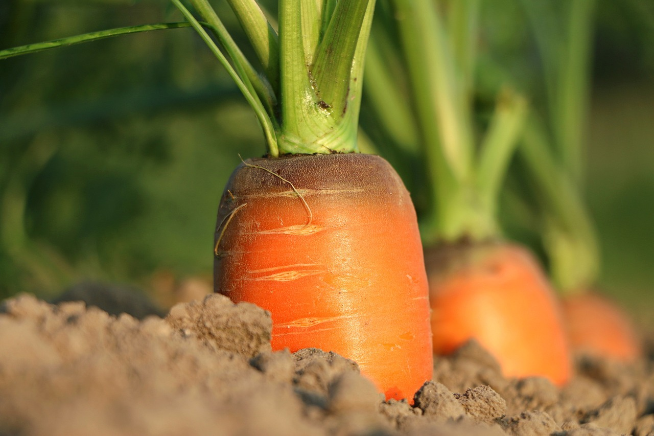 easy-growing spring vegetables