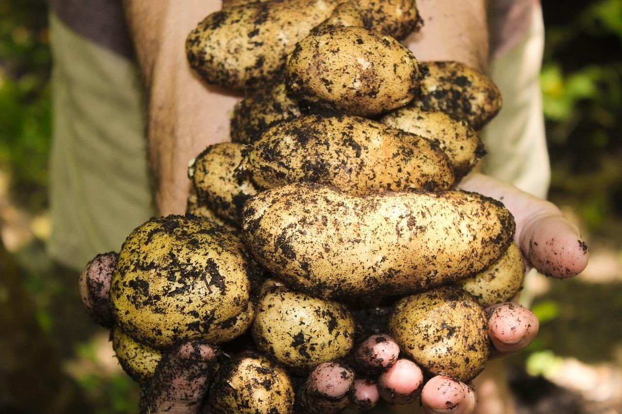 easy summer gardening tips