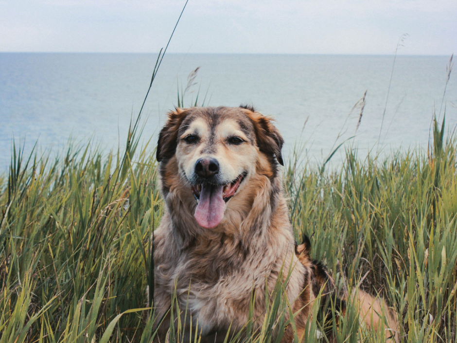 happy dog by the beach