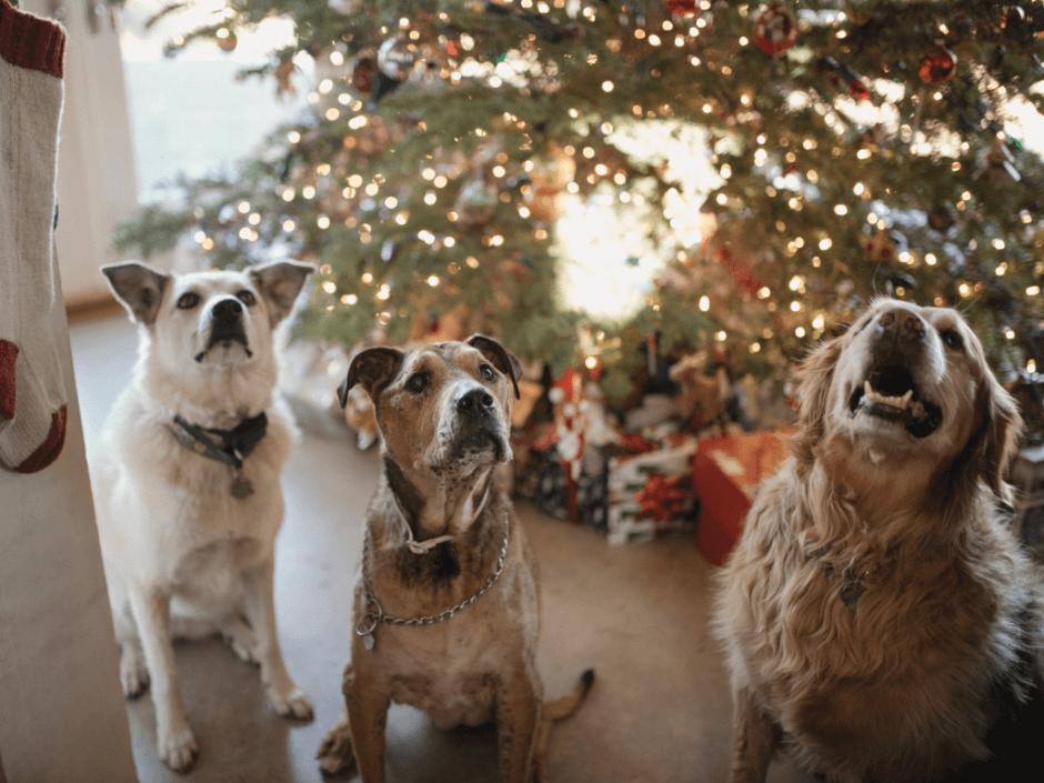 dogs at christnas