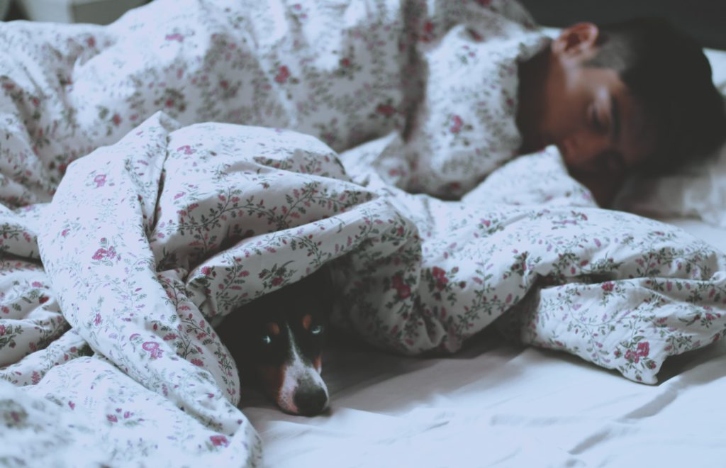 pet owners banished from bed