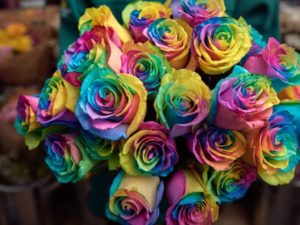 morrisons rainbow roses