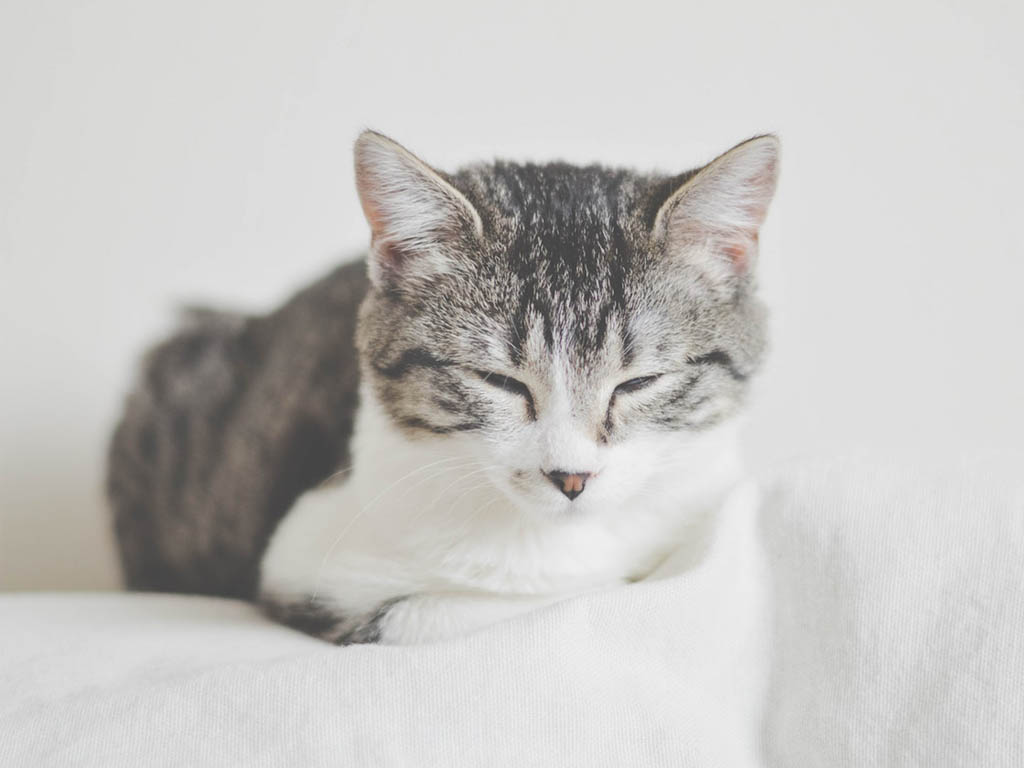 new study confirms owning cats is good for you
