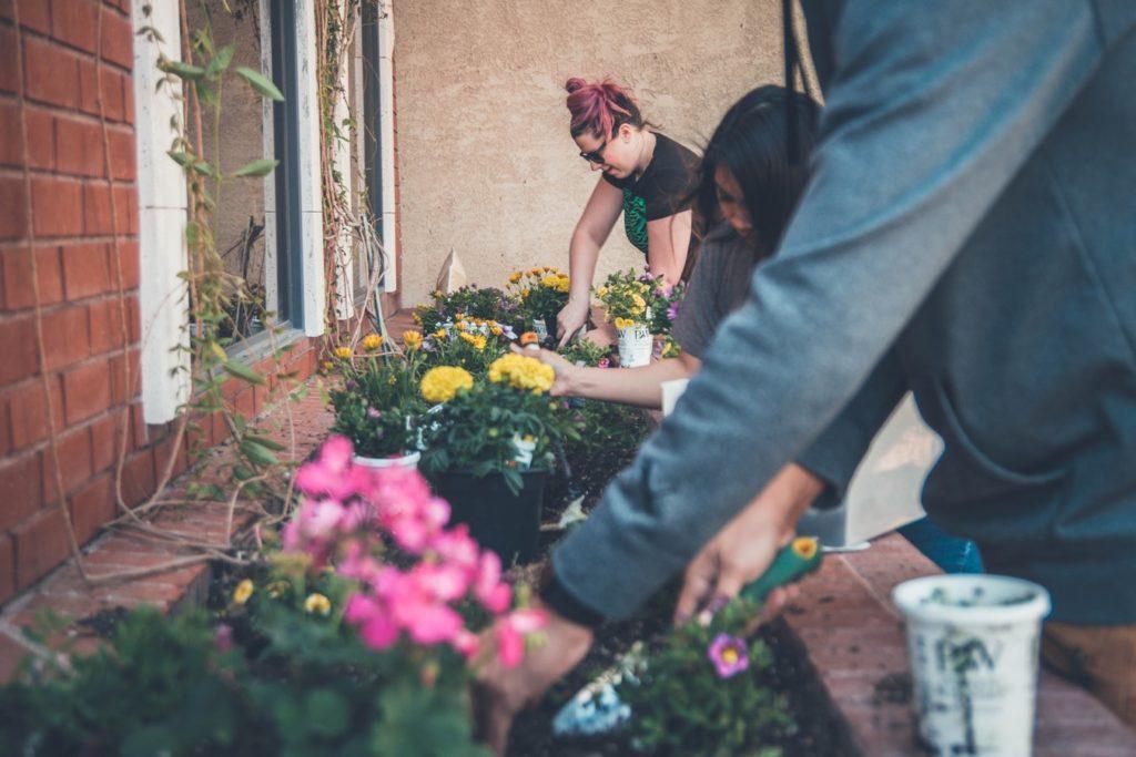 plastic free garden