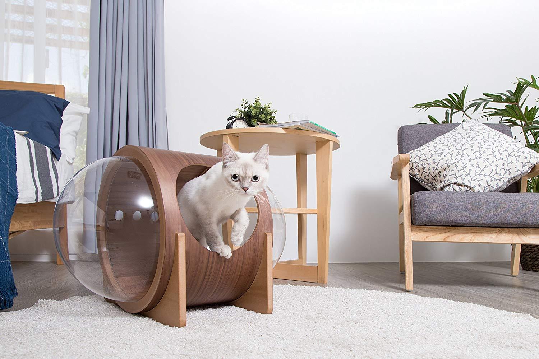 bubble cat bed