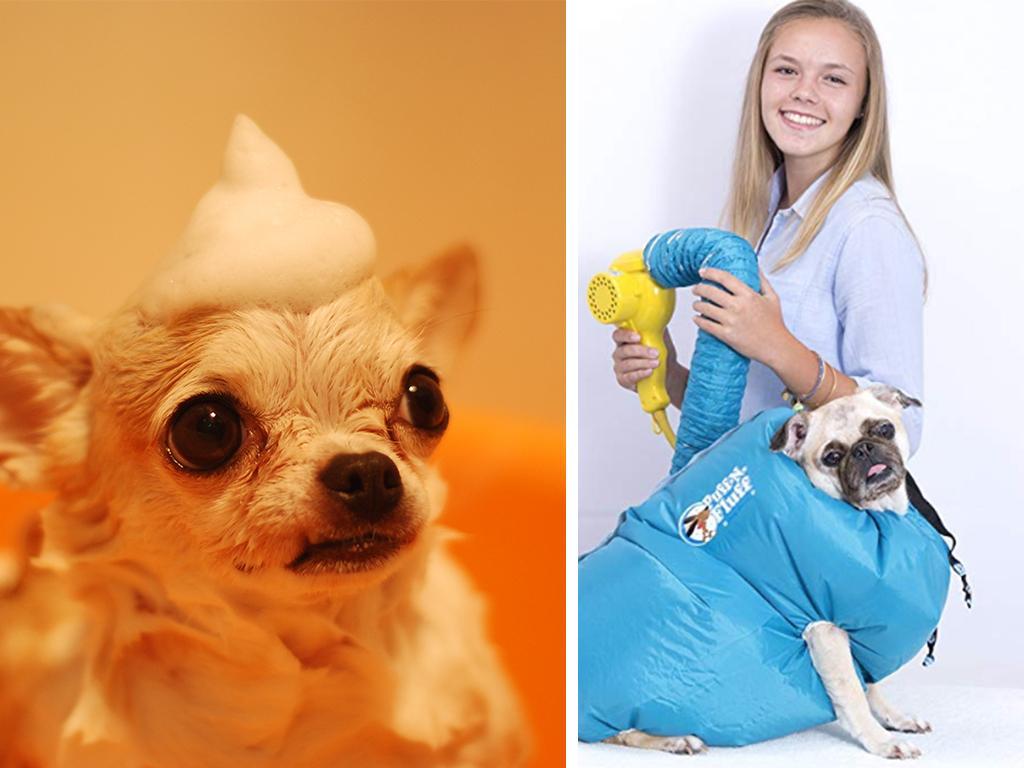 dog hairdryer
