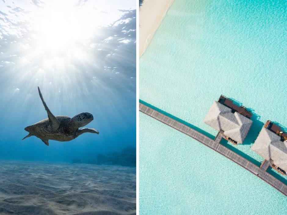 maldives turtle intern