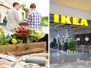ikea botanisk collection