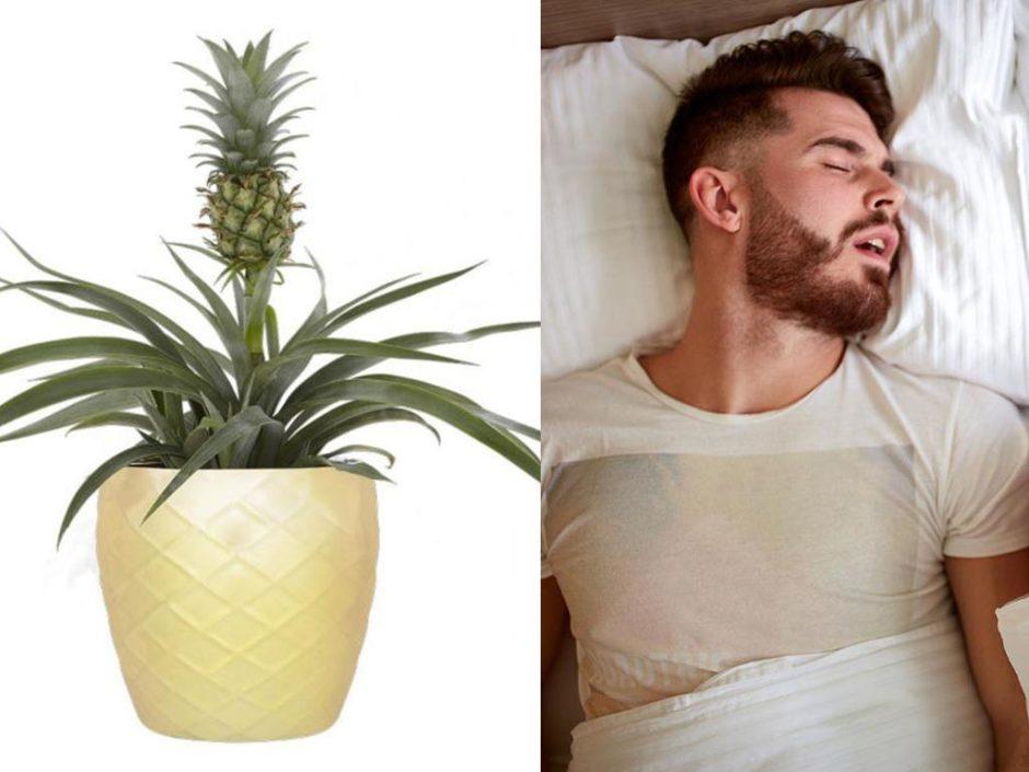 asda pineapple plant