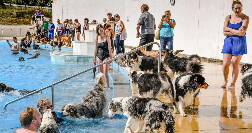lido dog swim 2019