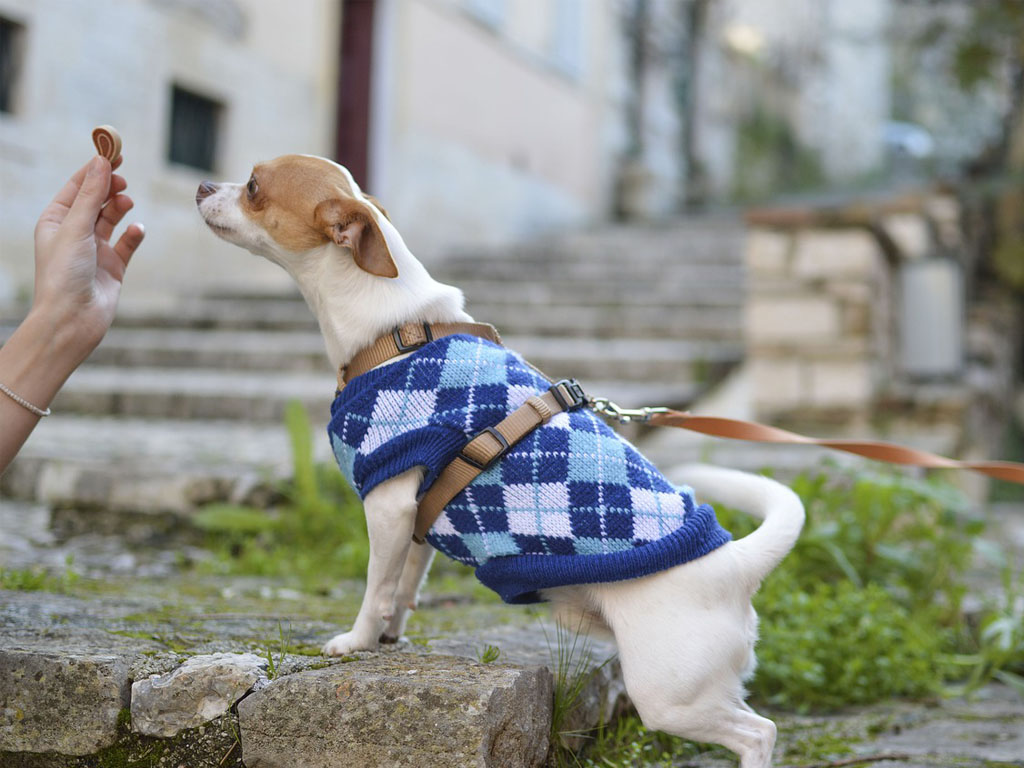 how to improve dog behaviour in pubs