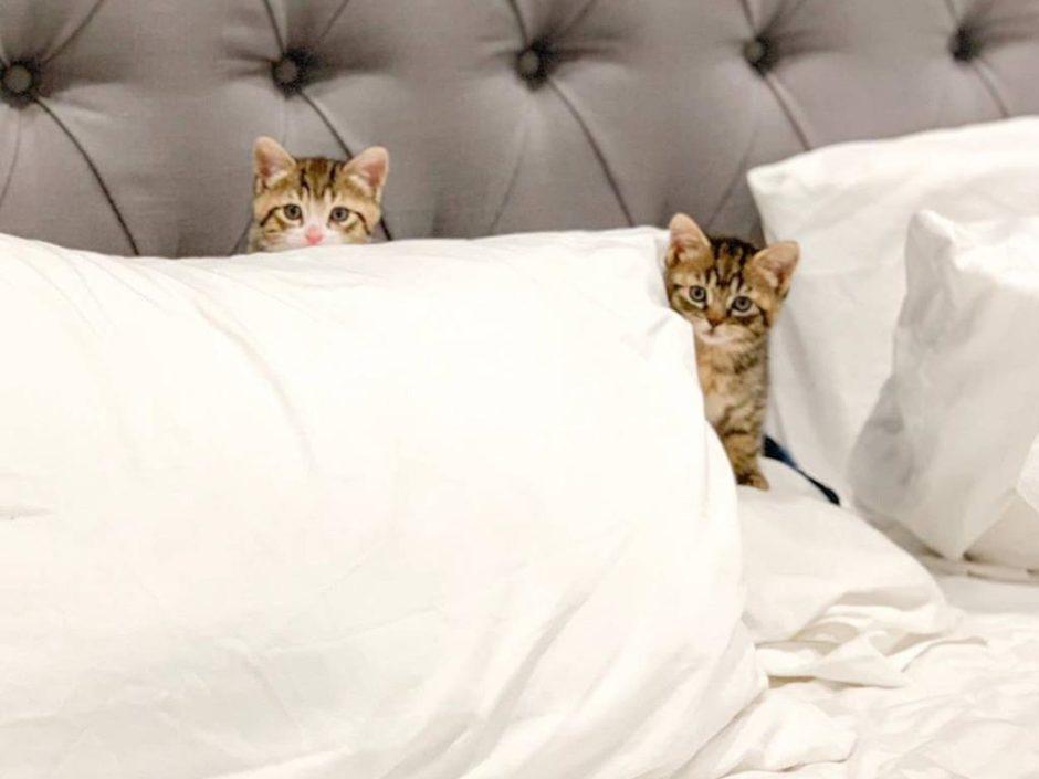 kitten airbnb