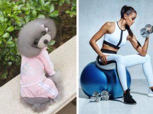 pet workout onesie