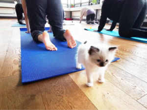 cat yoga london