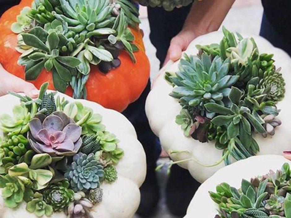 halloween pumpkin succulents