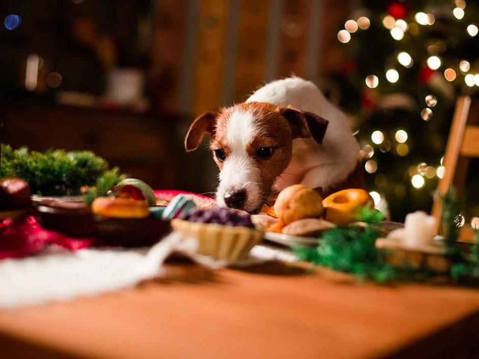 sainsburys pet christmas collection
