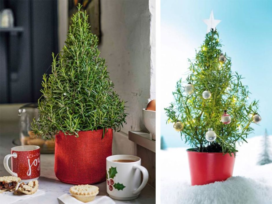 waitrose rosemary christmas trees