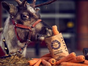 morrisons christmas carrot giveaway