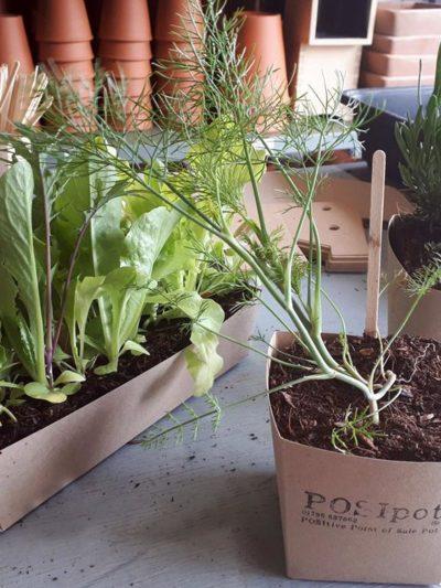 posipot plastic free planter