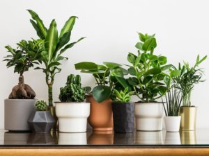 winter indoor plants