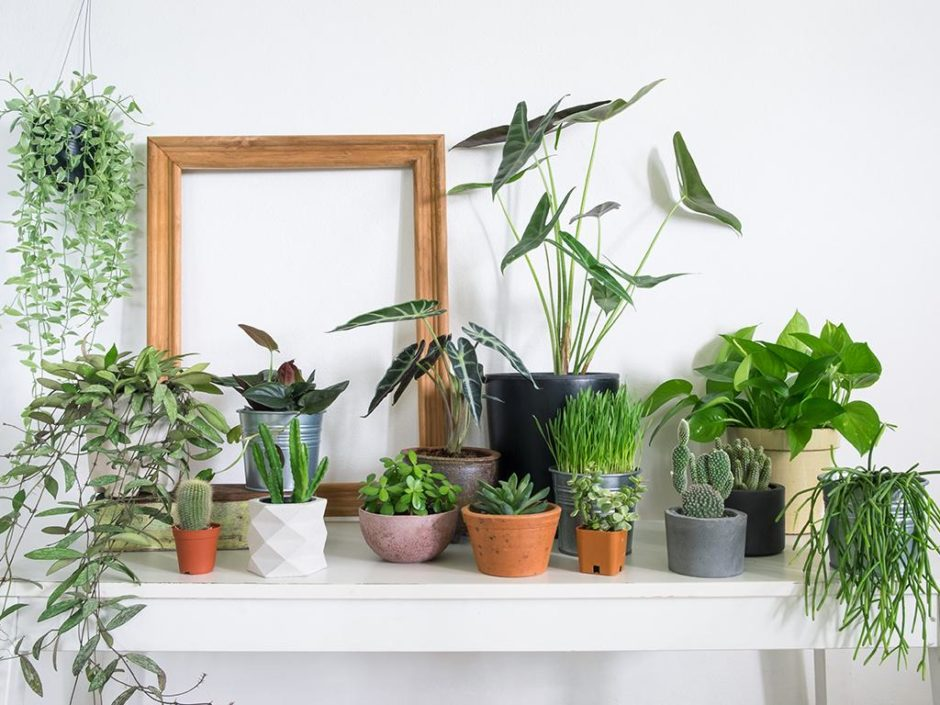 lidl houseplant collection