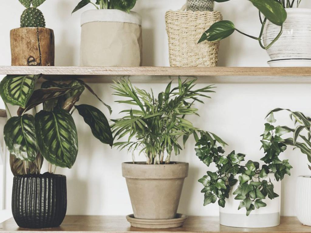 the lidl houseplant collection is a air purifying home. Black Bedroom Furniture Sets. Home Design Ideas