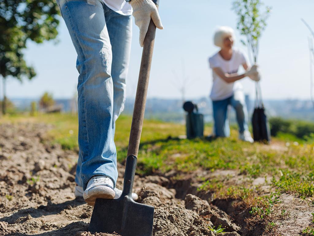 national trust tree planting
