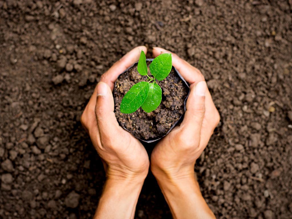 reduce reuse grow cups