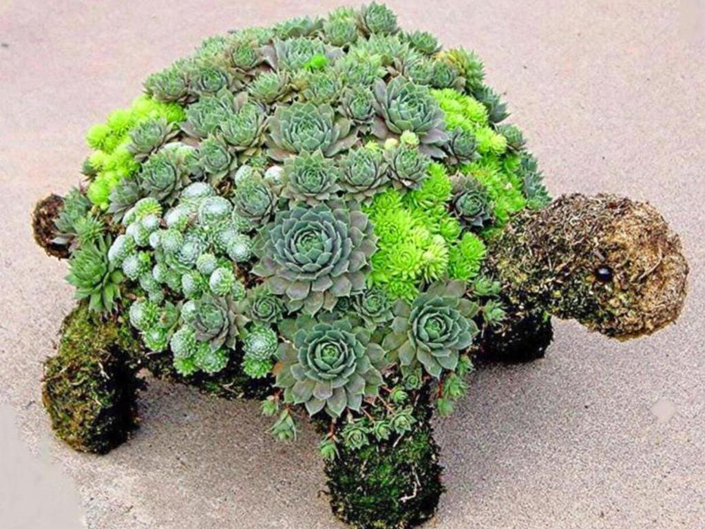 succulent turtle planter
