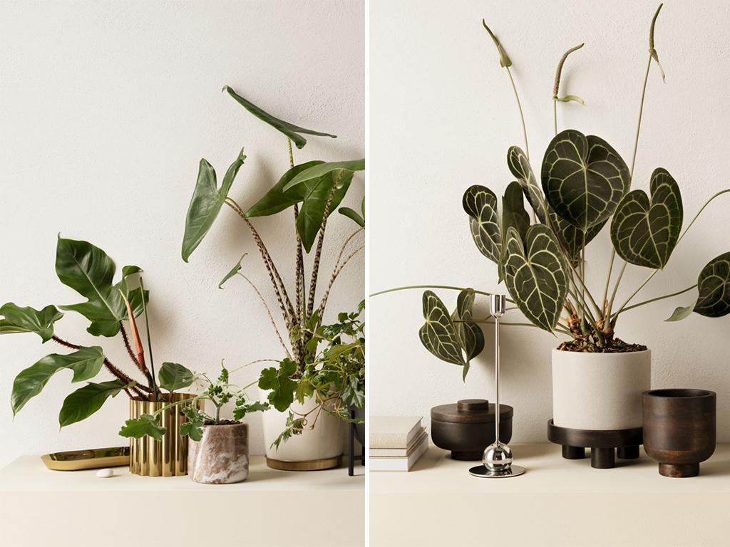 hm home decorative plants