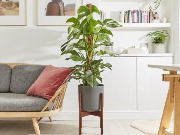 Patch Plant