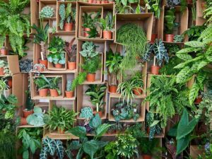 Super-sized Houseplants Are Set To Take Over in 2020